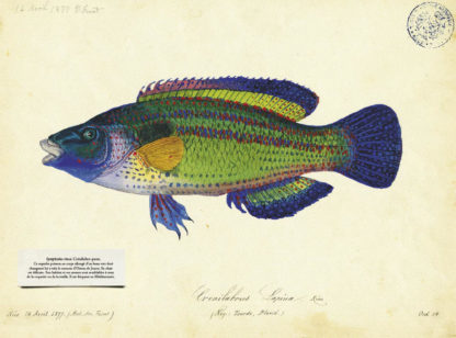 Feuilletage-Cabinet-de-Curiosites-poisson