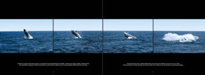 Feuilletage-Grands-mammiferes-marins-dauphin