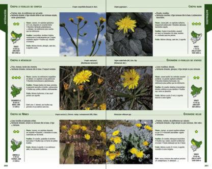Feuilletage-Guide-de-la-flore-jaune