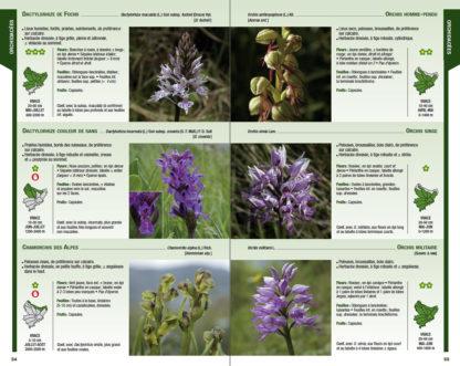 Feuilletage-Guide-de-la-flore-violet