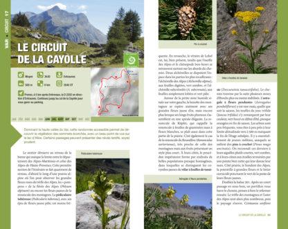 Feuilletage-Randonnees-Botaniques-Cayolle1
