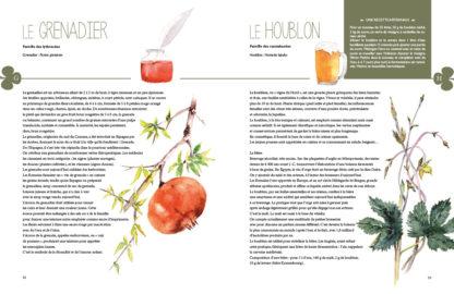 Feuilletage-Secrets-des-plantes-grenadier