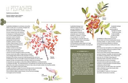 Feuilletage-Secrets-des-plantes-pistachier