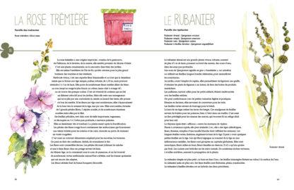Feuilletage-Secrets-des-plantes-rose-tremiere