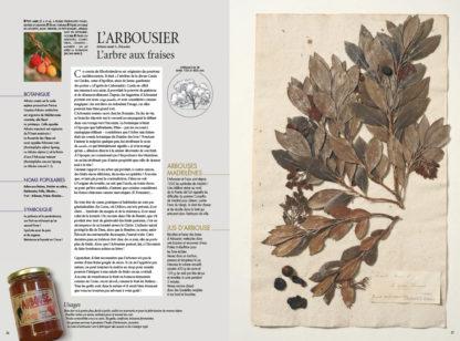 Feuilletage-herbier-mediterraneen-arbousier