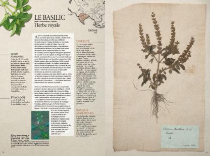 Feuilletage-herbier-mediterraneen-basilic