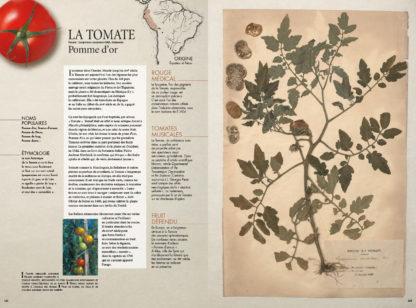 Feuilletage-herbier-mediterraneen-tomate