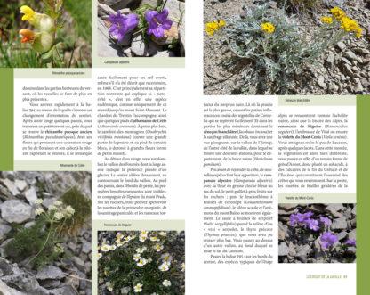 Randonnees-Botaniques-Cayolle-2